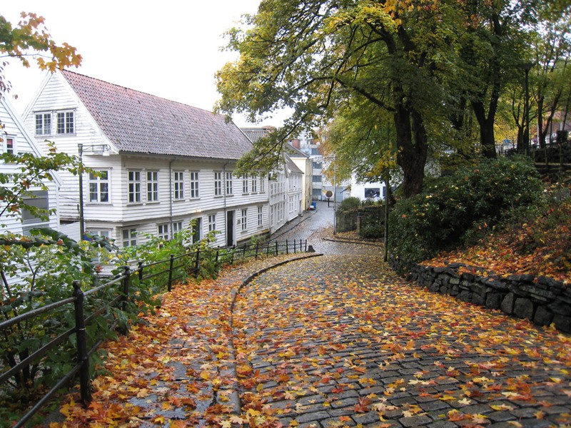 autumn leaves - Library